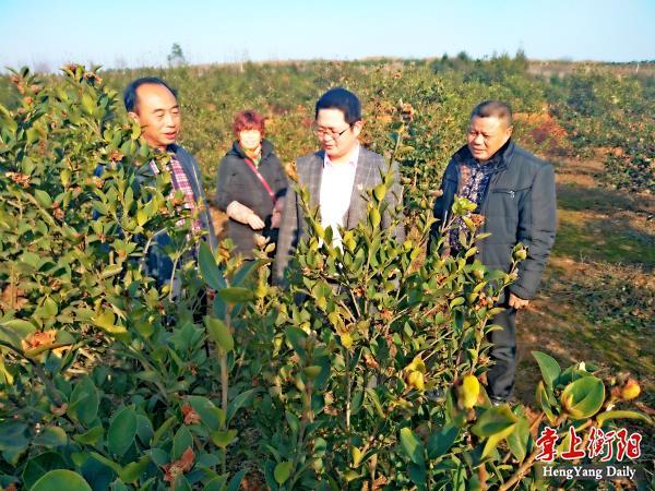张明义(左一)介绍油茶树情况_meitu_9.jpg